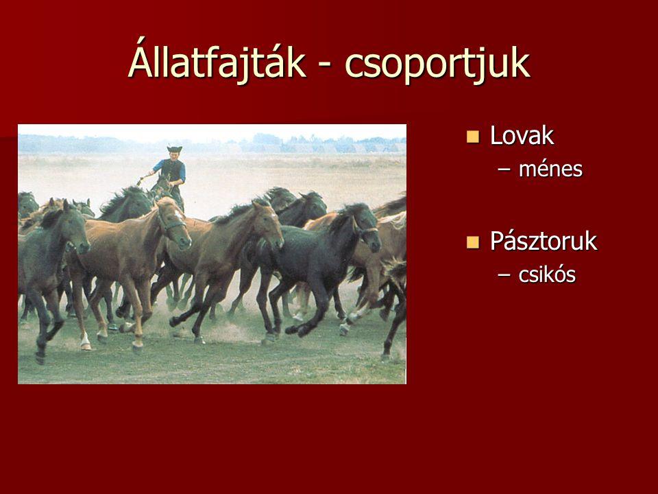 Állatfajták - csoportjuk  Lovak –ménes  Pásztoruk –csikós