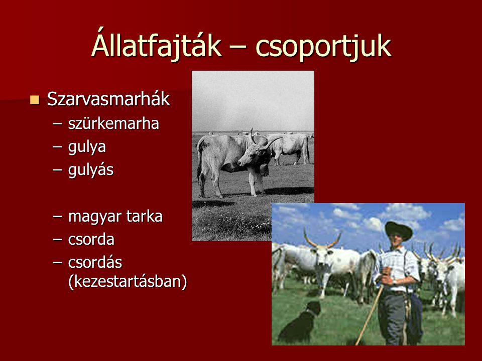 Állatfajták – csoportjuk  Szarvasmarhák –szürkemarha –gulya –gulyás –magyar tarka –csorda –csordás (kezestartásban)