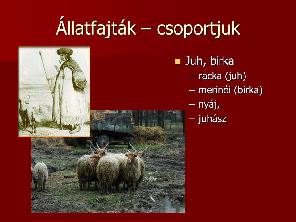 Állatfajták – csoportjuk  Juh, birka –racka (juh) –merinói (birka) –nyáj, –juhász
