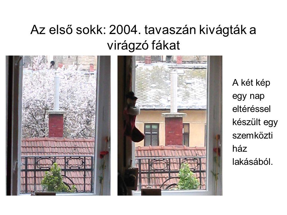 Az első sokk: 2004. tavaszán kivágták a virágzó fákat A két kép egy nap eltéréssel készült egy szemközti ház lakásából.