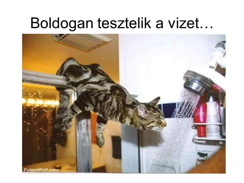 Boldogan tesztelik a vizet…