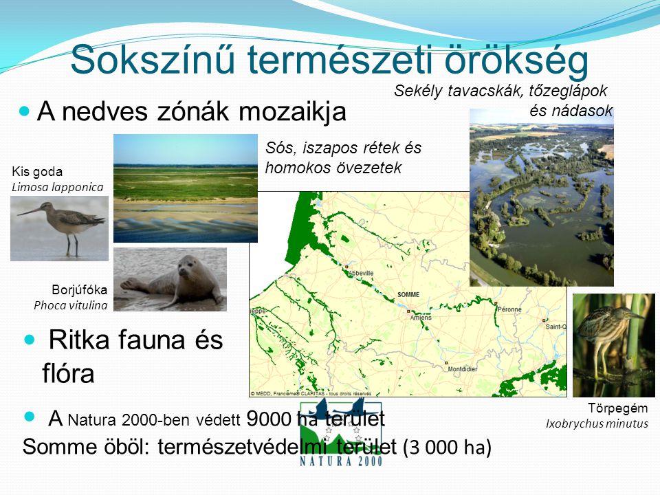  A Natura 2000-ben védett 9 000 ha terület Somme öböl: természetvédelmi terület (3 000 ha) Sokszínű természeti örökség  A nedves zónák mozaikja Sekély tavacskák, tőzeglápok és nádasok Sós, iszapos rétek és homokos övezetek  Ritka fauna és flóra Kis goda Limosa lapponica Borjúfóka Phoca vitulina Törpegém Ixobrychus minutus