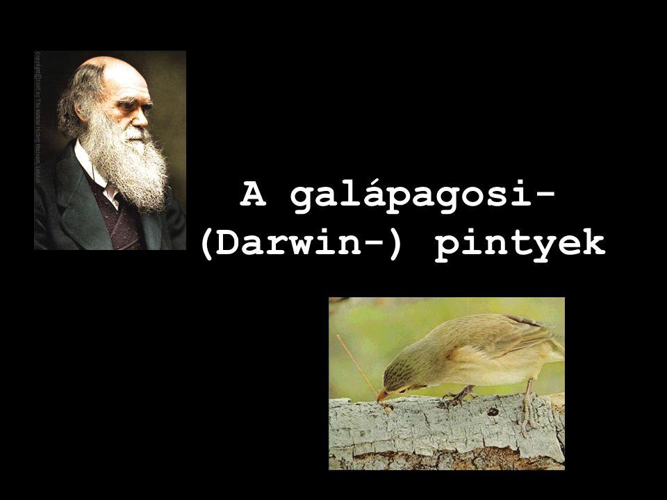 Alappélda • az evolúcióra • a niche-szétválásra • a helyben történő fajkeletkezésre