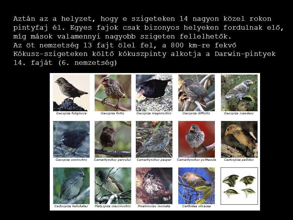 Aztán az a helyzet, hogy e szigeteken 14 nagyon közel rokon pintyfaj él. Egyes fajok csak bizonyos helyeken fordulnak elő, míg mások valamennyi nagyob