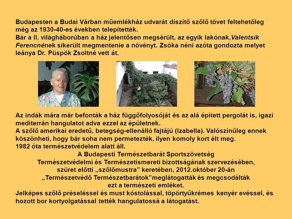 """Beszámoló Budavári szőlőtőke. 2012.10.20. Szombat. Képek a """"Szőlőmustráról."""