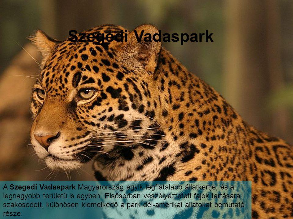 Szegedi Vadaspark A Szegedi Vadaspark Magyarország egyik legfiatalabb állatkertje, és a legnagyobb területű is egyben.