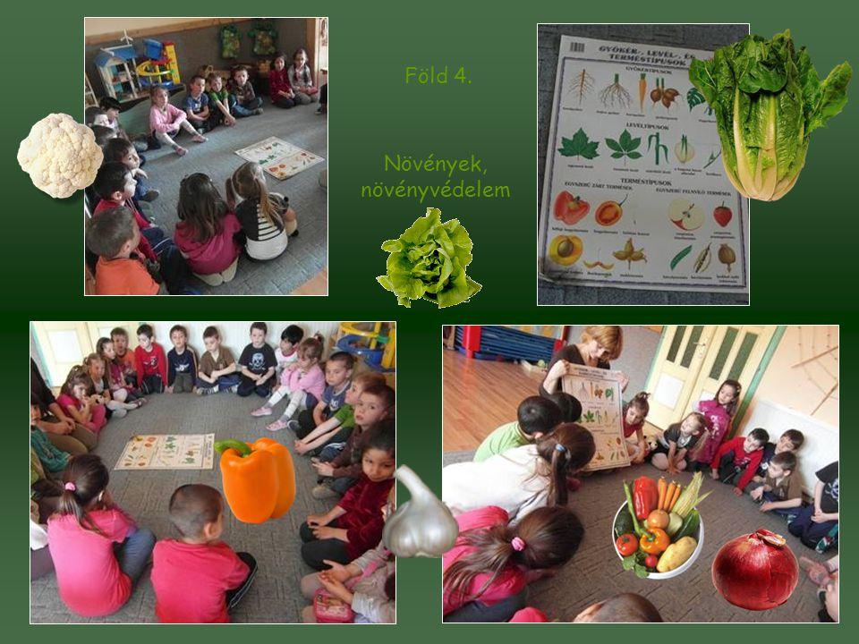 Föld 4. Növények, növényvédelem