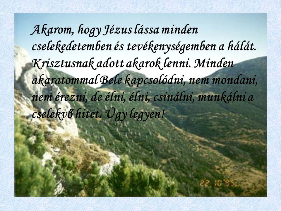 Akarom, hogy Jézus lássa minden cselekedetemben és tevékenységemben a hálát.