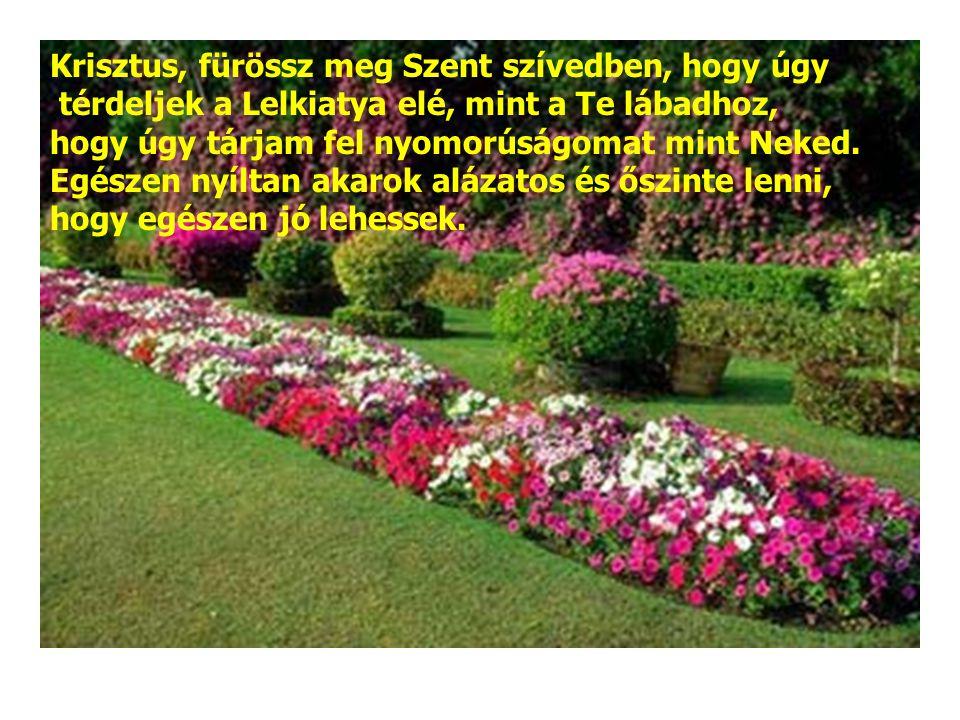 Krisztus, fürössz meg Szent szívedben, hogy úgy térdeljek a Lelkiatya elé, mint a Te lábadhoz, hogy úgy tárjam fel nyomorúságomat mint Neked.