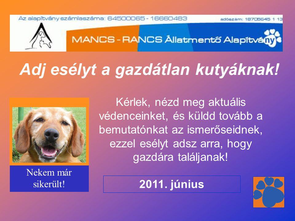 Adj esélyt a gazdátlan kutyáknak! Kérlek, nézd meg aktuális védenceinket, és küldd tovább a bemutatónkat az ismerőseidnek, ezzel esélyt adsz arra, hog