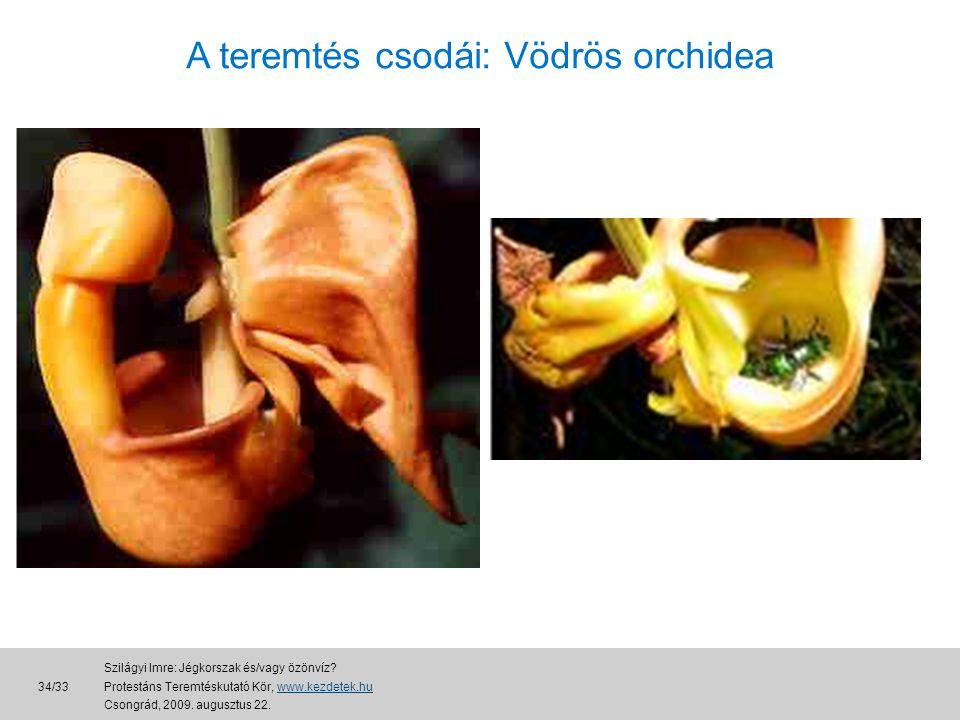 A teremtés csodái: Vödrös orchidea 34/33 Szilágyi Imre: Jégkorszak és/vagy özönvíz.