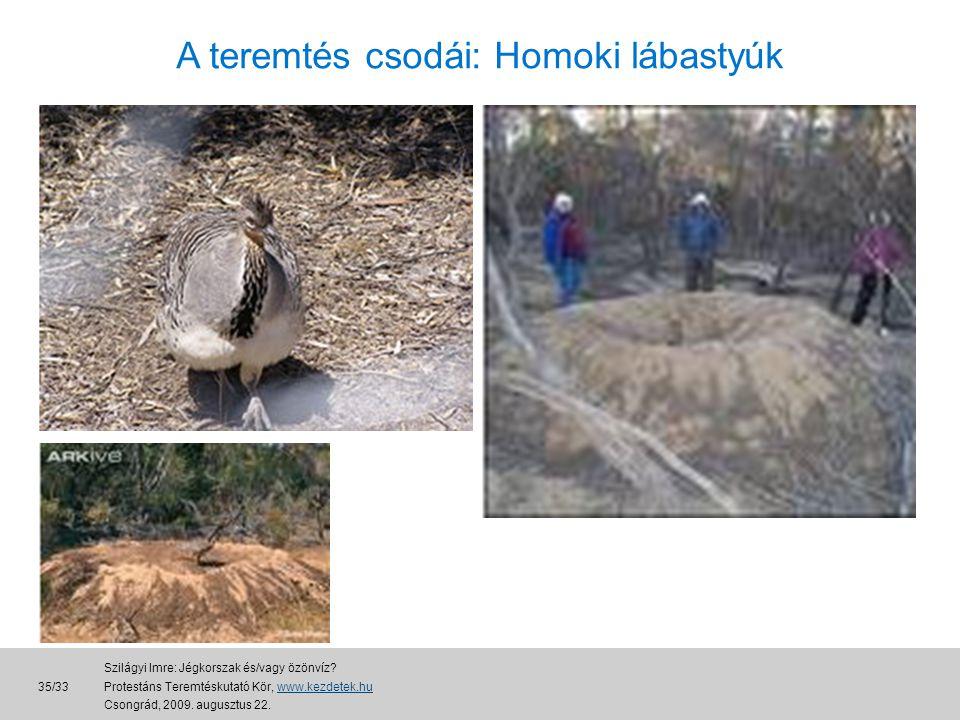 A teremtés csodái: Homoki lábastyúk 35/33 Szilágyi Imre: Jégkorszak és/vagy özönvíz.