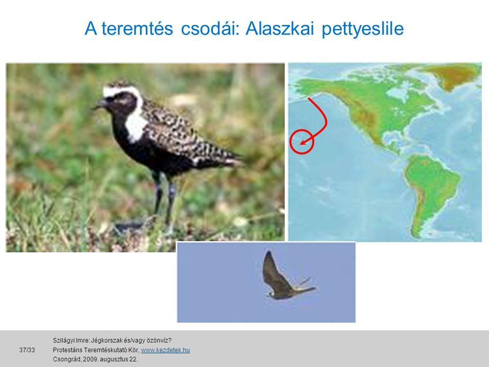 A teremtés csodái: Alaszkai pettyeslile 37/33 Szilágyi Imre: Jégkorszak és/vagy özönvíz.