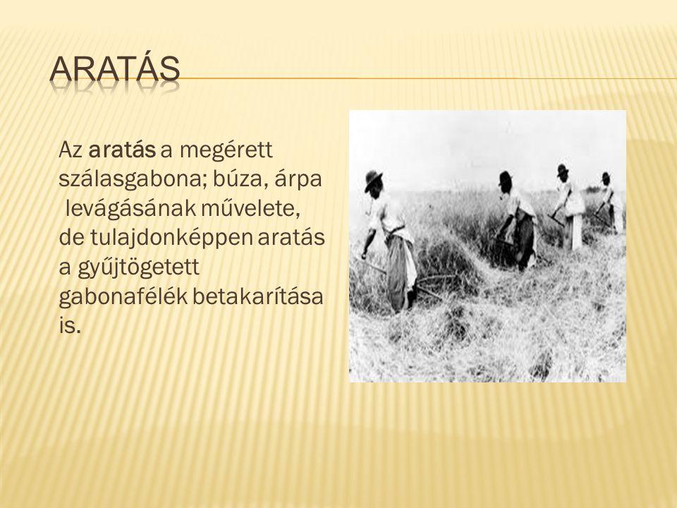 Az aratás a megérett szálasgabona; búza, árpa levágásának művelete, de tulajdonképpen aratás a gyűjtögetett gabonafélék betakarítása is.