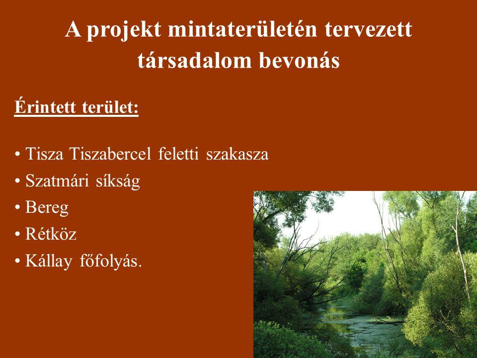 Érintett terület: • Tisza Tiszabercel feletti szakasza • Szatmári síkság • Bereg • Rétköz • Kállay főfolyás.