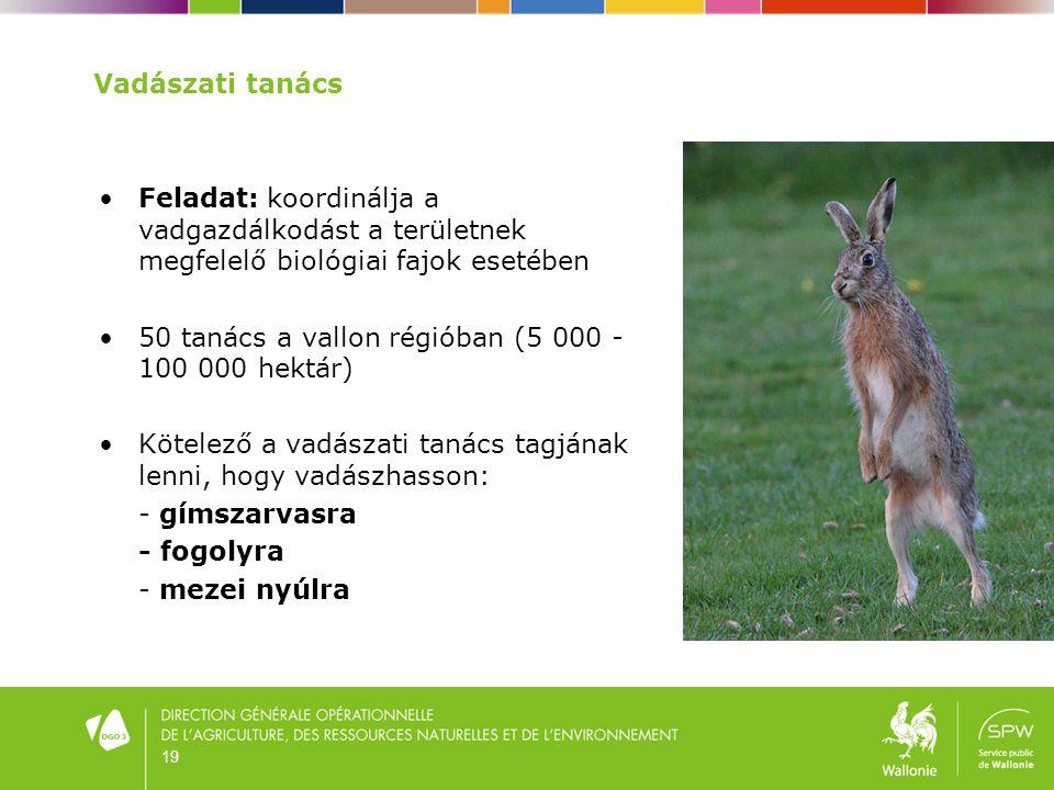 19 Vadászati tanács •Feladat: koordinálja a vadgazdálkodást a területnek megfelelő biológiai fajok esetében •50 tanács a vallon régióban (5 000 - 100