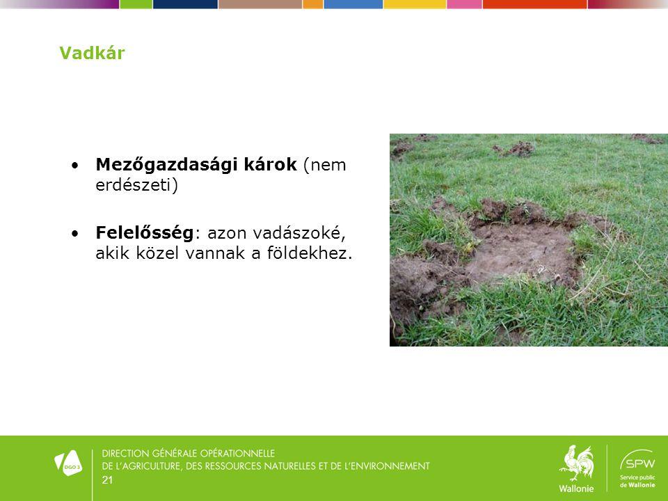 21 Vadkár •Mezőgazdasági károk (nem erdészeti) •Felelősség: azon vadászoké, akik közel vannak a földekhez.
