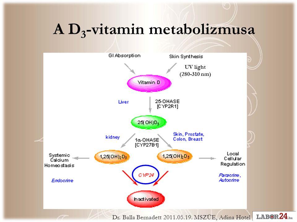 A D 3 -vitamin metabolizmusa Dr. Balla Bernadett 2011.05.19.