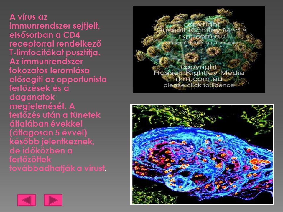 A vírus az immunrendszer sejtjeit, elsősorban a CD4 receptorral rendelkező T-limfocitákat pusztítja. Az immunrendszer fokozatos leromlása elősegíti az
