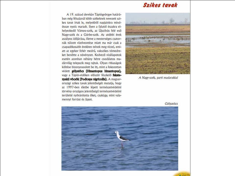 Aktuális hírek a madármegfigyelésről található az MME honlapjánMME honlapján http://www.mme.hu/component/c ontent/article/15-legfrissebb- hirek/2206-r