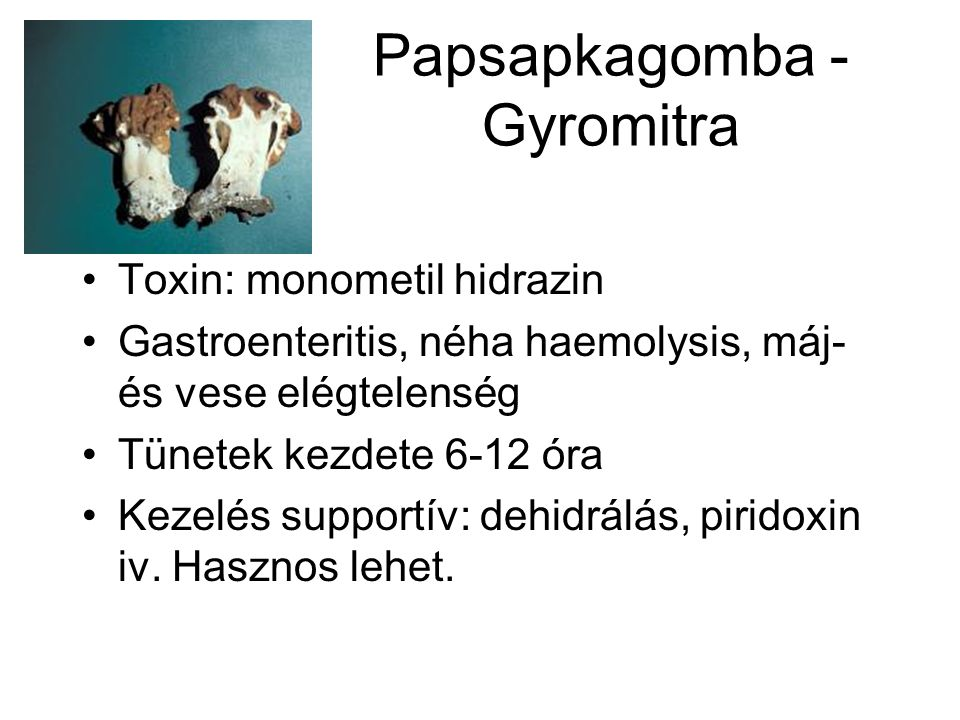 Papsapkagomba - Gyromitra •Toxin: monometil hidrazin •Gastroenteritis, néha haemolysis, máj- és vese elégtelenség •Tünetek kezdete 6-12 óra •Kezelés s