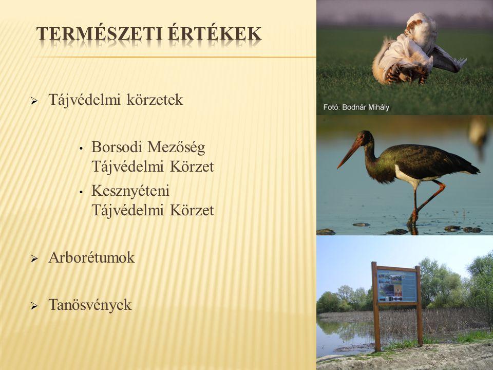  Tájvédelmi körzetek • Borsodi Mezőség Tájvédelmi Körzet • Kesznyéteni Tájvédelmi Körzet  Arborétumok  Tanösvények