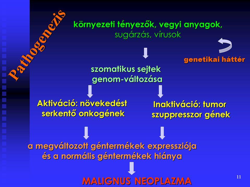 11 Pathogenezis környezeti tényezők, vegyi anyagok, sugárzás, vírusok szomatikus sejtek genom-változása genom-változása Aktiváció: növekedést serkentő onkogének Inaktiváció: tumor szuppresszor gének szuppresszor gének a megváltozott géntermékek expressziója és a normális géntermékek hiánya MALIGNUS NEOPLAZMA genetikai háttér