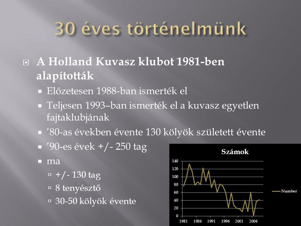 A Holland Kuvasz klubot 1981-ben alapították  Előzetesen 1988-ban ismerték el  Teljesen 1993–ban ismerték el a kuvasz egyetlen fajtaklubjának  '80-as években évente 130 kölyök született évente  '90-es évek +/- 250 tag  ma  +/- 130 tag  8 tenyésztő  30-50 kölyök évente