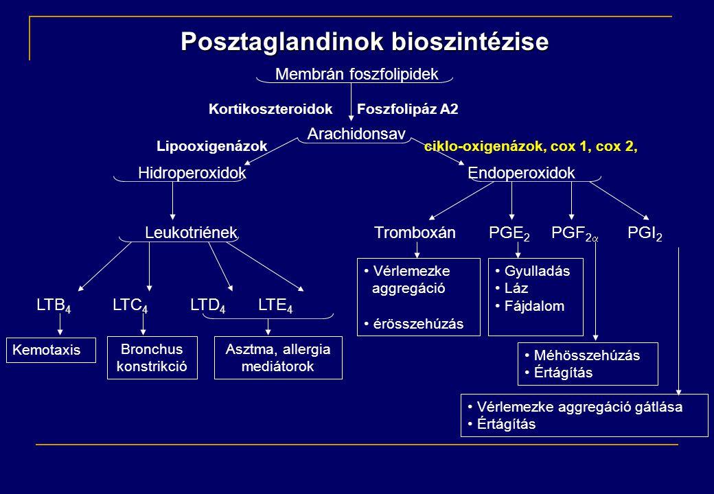 Membrán foszfolipidek Arachidonsav HidroperoxidokEndoperoxidok Leukotriének Tromboxán PGE 2 PGF 2   PGI 2 LTB 4 LTC 4 LTD 4 LTE 4 Posztaglandinok bioszintézise Kortikoszteroidok Foszfolipáz A2 Lipooxigenázok ciklo-oxigenázok, cox 1, cox 2, Kemotaxis • Vérlemezke aggregáció • érösszehúzás • Gyulladás • Láz • Fájdalom • Méhösszehúzás • Értágítás • Vérlemezke aggregáció gátlása • Értágítás Bronchus konstrikció Asztma, allergia mediátorok