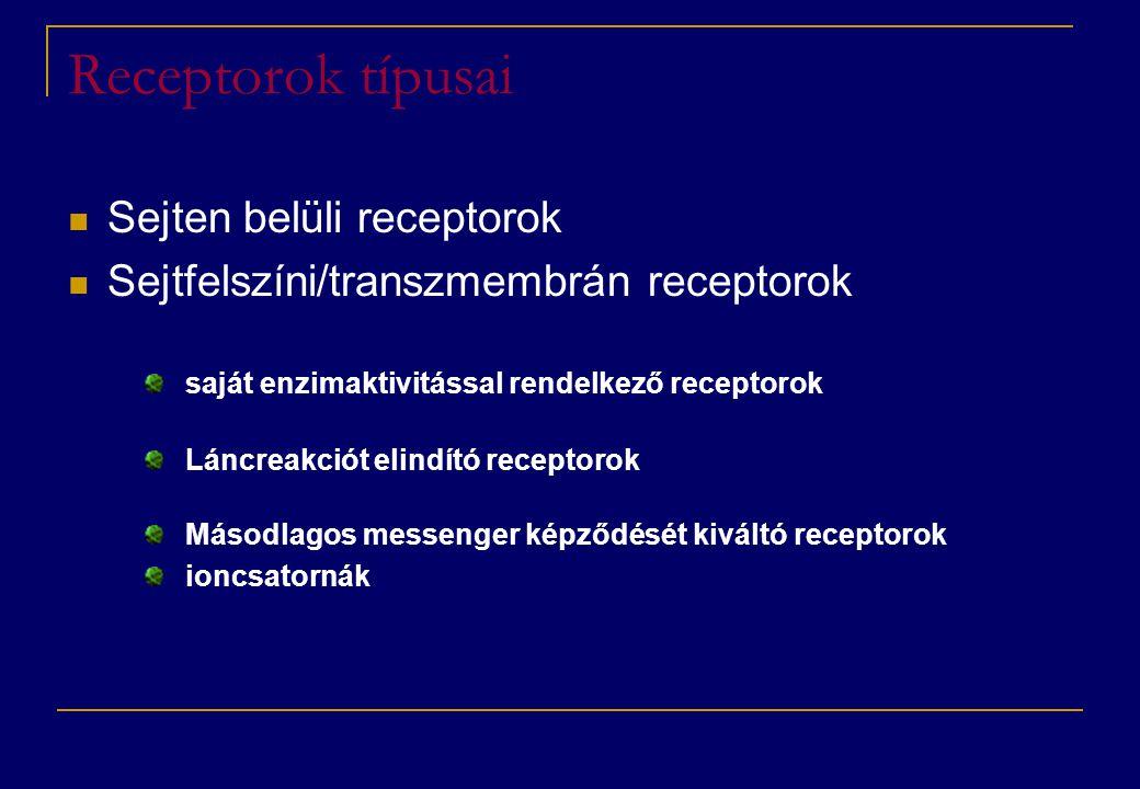 Receptorok típusai  Sejten belüli receptorok  Sejtfelszíni/transzmembrán receptorok saját enzimaktivitással rendelkező receptorok Láncreakciót elindító receptorok Másodlagos messenger képződését kiváltó receptorok ioncsatornák