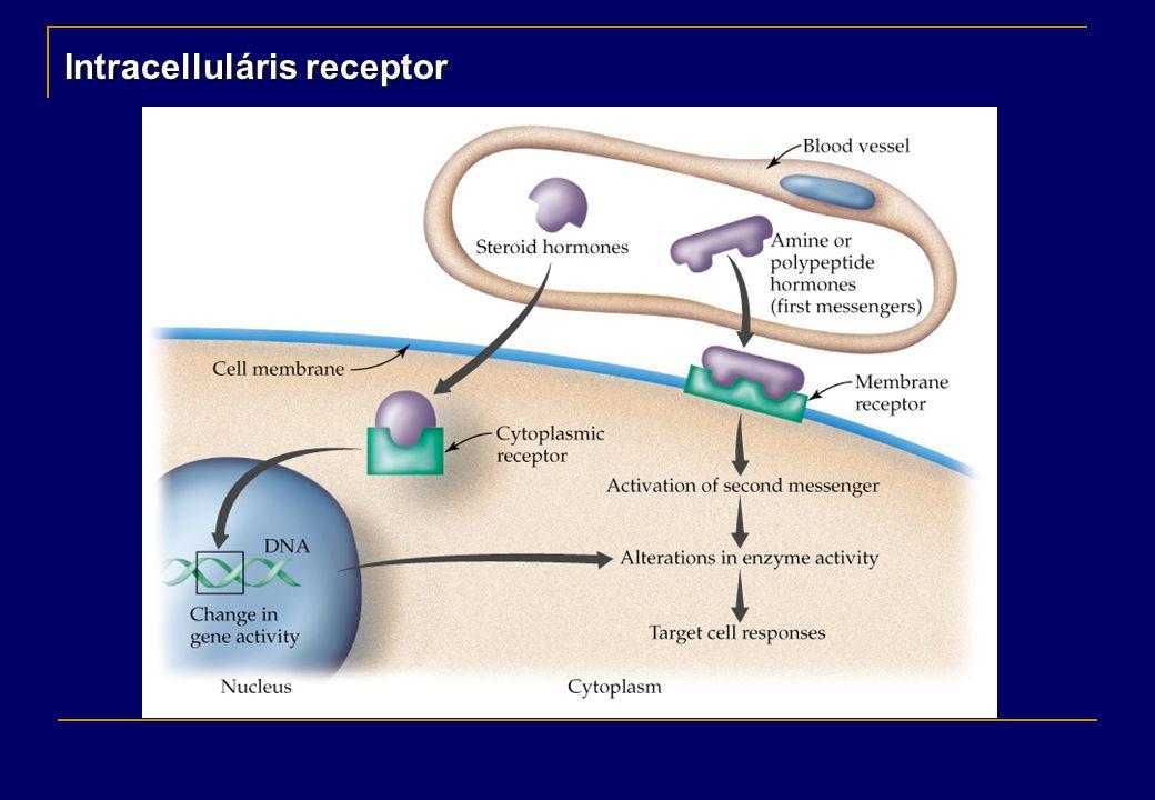 Saját enzimaktivitással rendelkező transzmembrán receptor Tirozin kináz