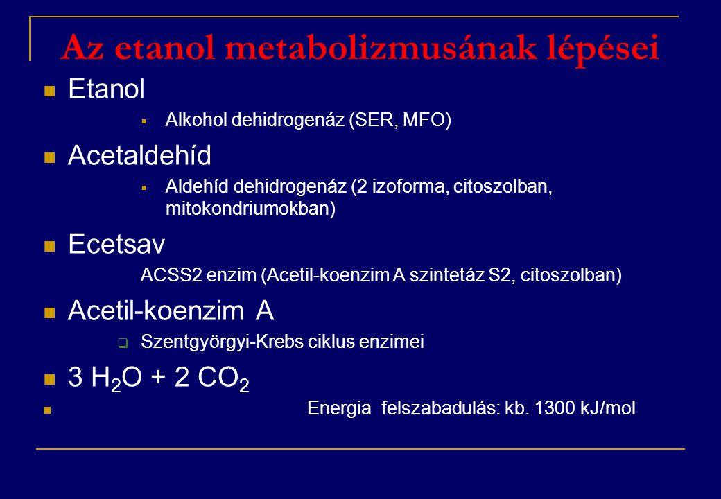 Az etanol metabolizmusának lépései  Etanol  Alkohol dehidrogenáz (SER, MFO)  Acetaldehíd  Aldehíd dehidrogenáz (2 izoforma, citoszolban, mitokondriumokban)  Ecetsav ACSS2 enzim (Acetil-koenzim A szintetáz S2, citoszolban)  Acetil-koenzim A  Szentgyörgyi-Krebs ciklus enzimei  3 H 2 O + 2 CO 2  Energia felszabadulás: kb.