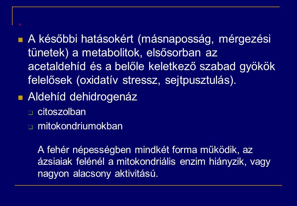 .  A későbbi hatásokért (másnaposság, mérgezési tünetek) a metabolitok, elsősorban az acetaldehíd és a belőle keletkező szabad gyökök felelősek (oxid
