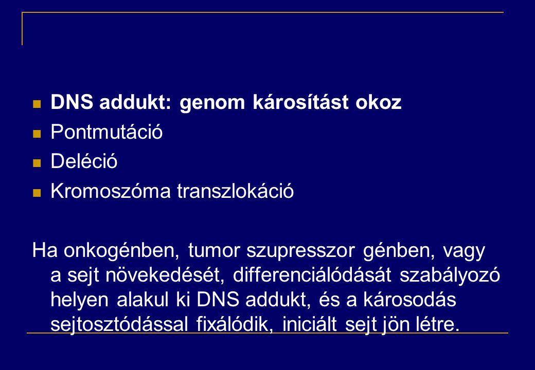  DNS addukt: genom károsítást okoz  Pontmutáció  Deléció  Kromoszóma transzlokáció Ha onkogénben, tumor szupresszor génben, vagy a sejt növekedésé