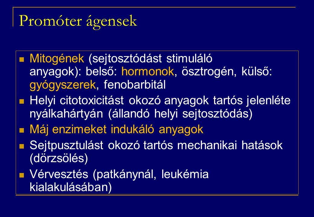 Promóter ágensek  Mitogének (sejtosztódást stimuláló anyagok): belső: hormonok, ösztrogén, külső: gyógyszerek, fenobarbitál  Helyi citotoxicitást okozó anyagok tartós jelenléte nyálkahártyán (állandó helyi sejtosztódás)  Máj enzimeket indukáló anyagok  Sejtpusztulást okozó tartós mechanikai hatások (dörzsölés)  Vérvesztés (patkánynál, leukémia kialakulásában)