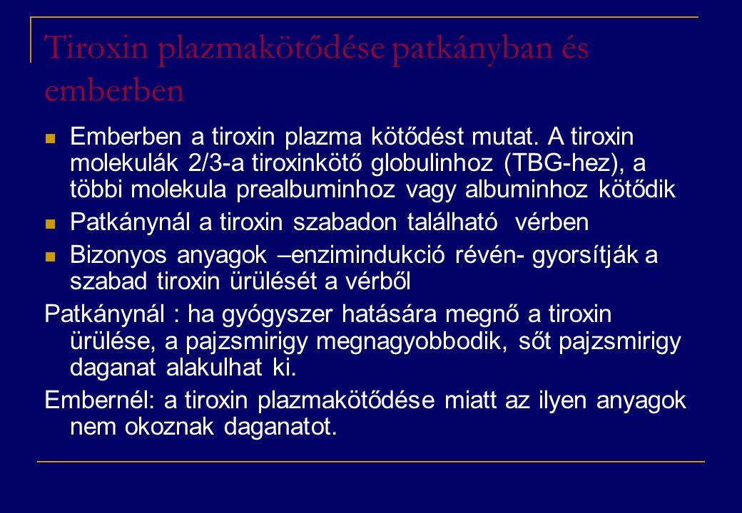 Tiroxin plazmakötődése patkányban és emberben  Emberben a tiroxin plazma kötődést mutat. A tiroxin molekulák 2/3-a tiroxinkötő globulinhoz (TBG-hez),