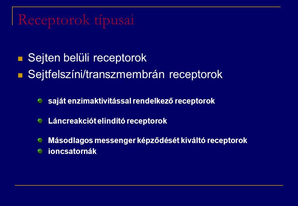 Receptorok típusai  Sejten belüli receptorok  Sejtfelszíni/transzmembrán receptorok saját enzimaktivitással rendelkező receptorok Láncreakciót elind