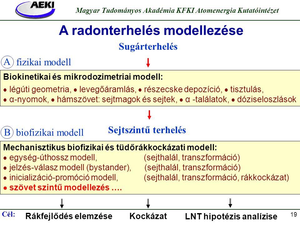 Török Szabina Magyar Tudományos Akadémia KFKI Atomenergia Kutatóintézet 19 Mechanisztikus biofizikai és tüdőrákkockázati modell:  egység-úthossz mode