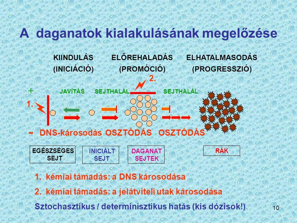 10 A daganatok kialakulásának megelőzése KIINDULÁS (INICIÁCIÓ) ELŐREHALADÁS (PROMÓCIÓ) ELHATALMASODÁS (PROGRESSZIÓ) JAVÍTÁSSEJTHALÁL DNS-károsodásOSZT