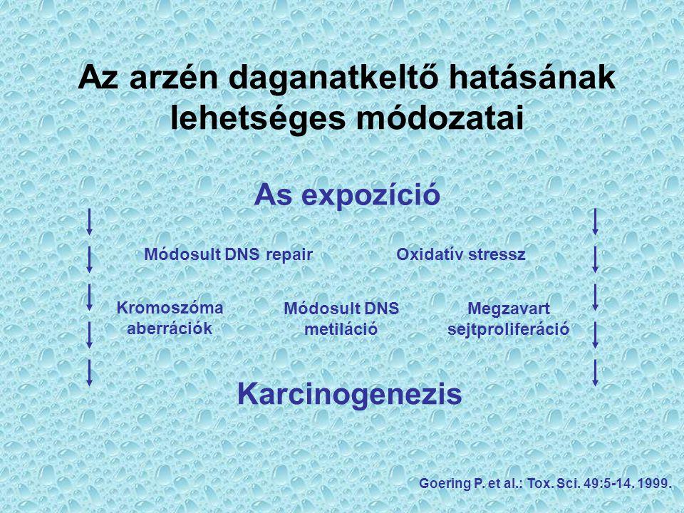 Az arzén daganatkeltő hatásának lehetséges módozatai As expozíció Karcinogenezis Módosult DNS repairOxidatív stressz Kromoszóma aberrációk Módosult DN