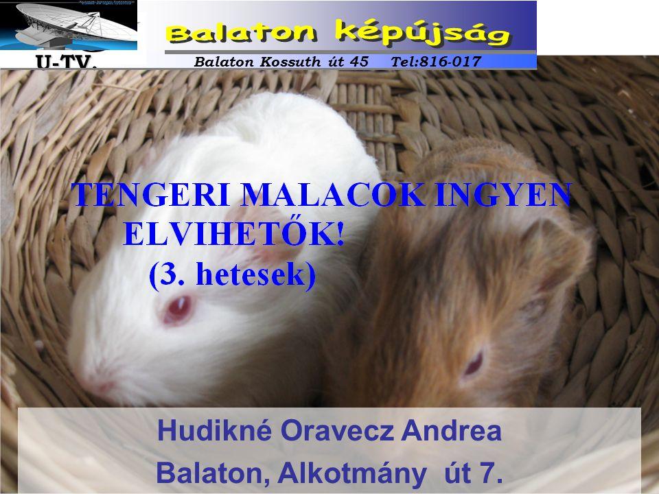 Hudikné Oravecz Andrea Balaton, Alkotmány út 7. Balaton Kossuth út 45 Tel:816-017 U-TV. U-TV.