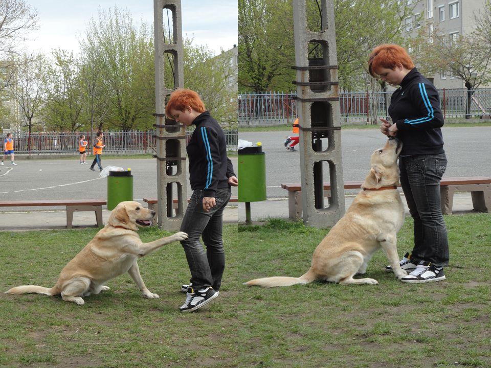 Megvalósítás útján • Eredmények: - Folyamatos önkéntes munka az állatmenhelyen - Állattartási kultúra formálása - Az állatmenhely munkájának megismertetése a médiában (Revita TV, Oxygen TV, Kisalföld)
