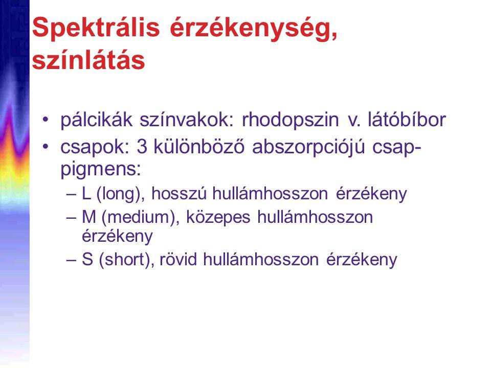 •pálcikák színvakok: rhodopszin v. látóbíbor •csapok: 3 különböző abszorpciójú csap- pigmens: –L (long), hosszú hullámhosszon érzékeny –M (medium), kö