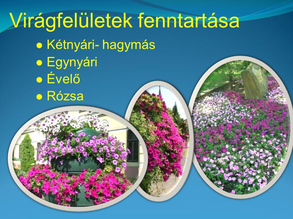 Virágfelületek fenntartása  Kétnyári- hagymás  Egynyári  Évelő  Rózsa