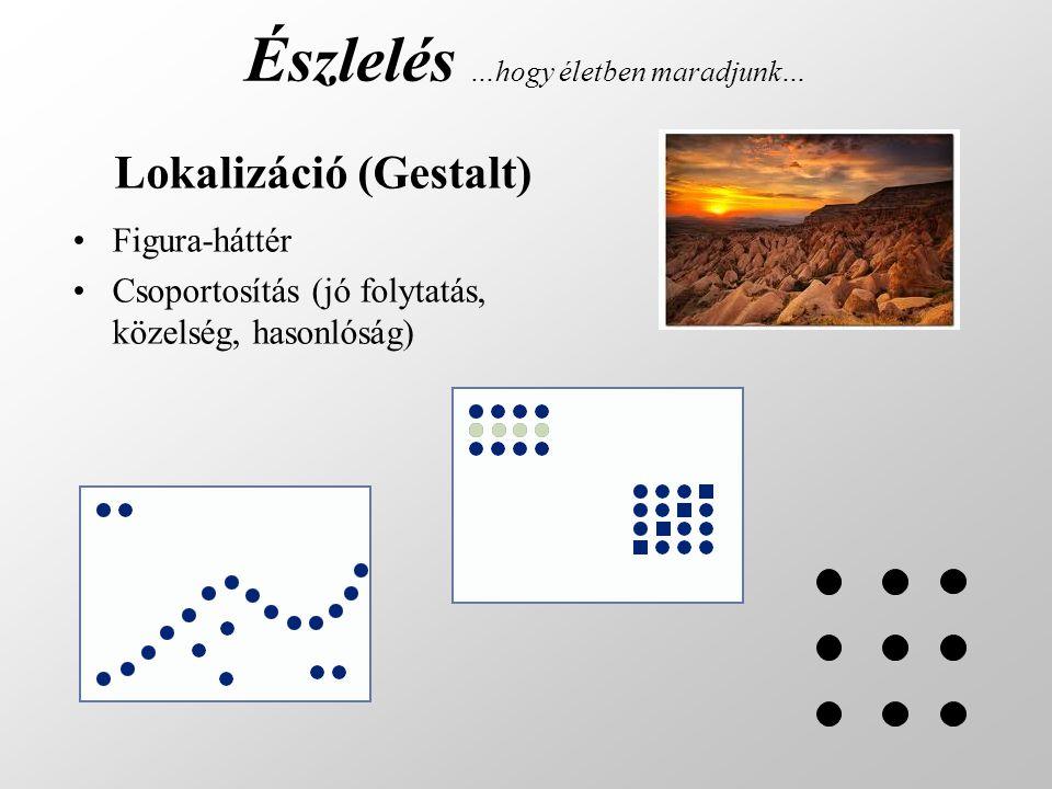 Észlelés …hogy életben maradjunk… •Figura-háttér •Csoportosítás (jó folytatás, közelség, hasonlóság) Lokalizáció (Gestalt)