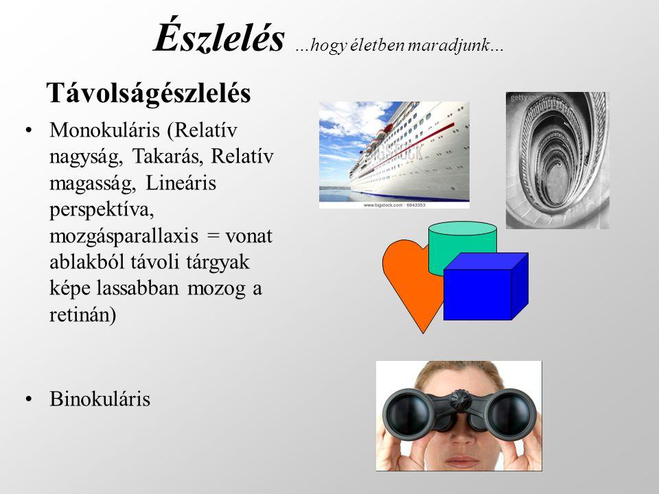 Távolságészlelés •Monokuláris (Relatív nagyság, Takarás, Relatív magasság, Lineáris perspektíva, mozgásparallaxis = vonat ablakból távoli tárgyak képe