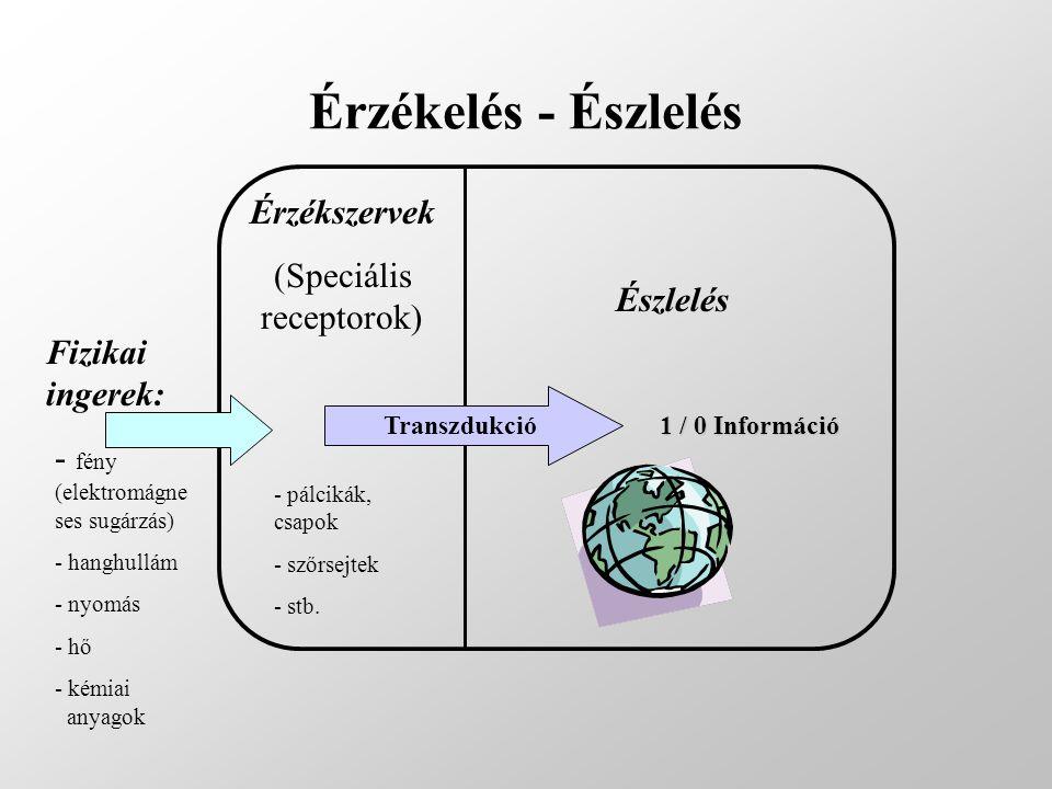 Érzékelés - Észlelés Fizikai ingerek: - fény (elektromágne ses sugárzás) - hanghullám - nyomás - hő - kémiai anyagok Érzékszervek (Speciális receptoro