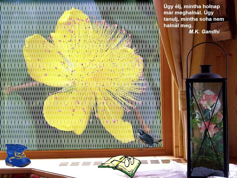 Ahol virágok nyílnak, ott a remény is jelen van. Lady Bird Johnson
