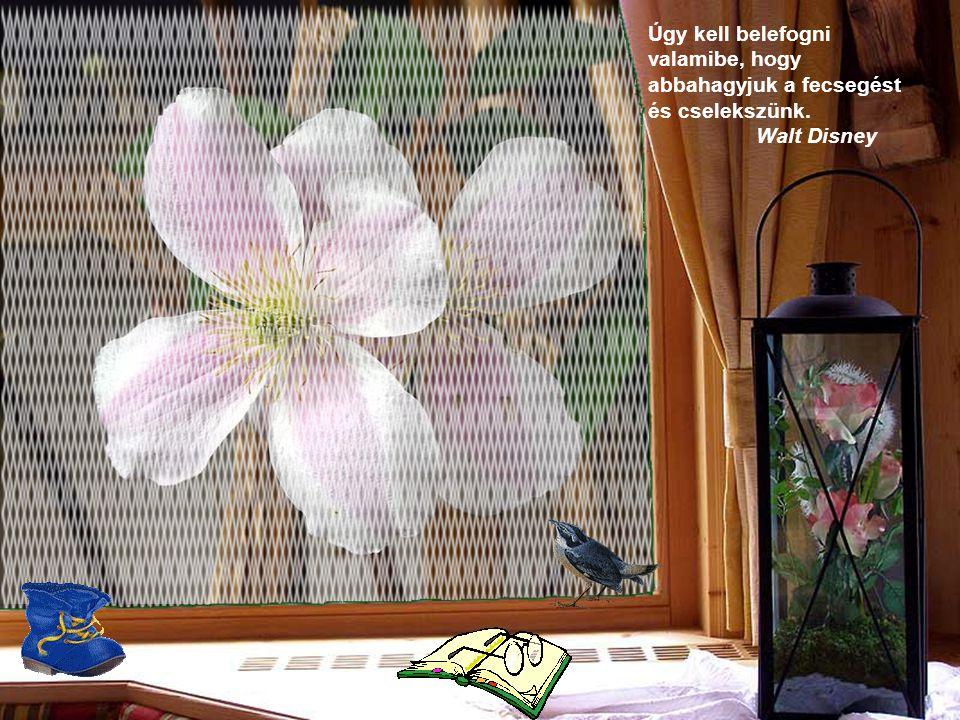 Néhány virág a kertemben, pár kép, egy- két könyv, és irigység nélkül élek. Lope de Vega