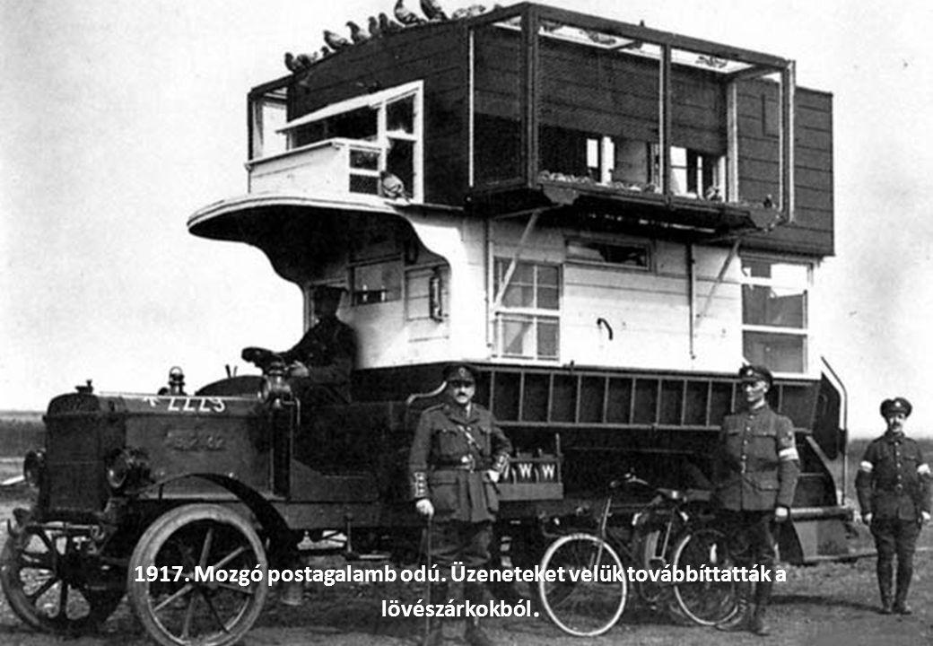 1917 körül. A lövészárkokban elejtett patkányokat is megették a ha már hetek óta nem jött élelmiszer-szállítmány.